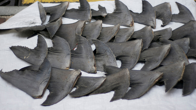 Shark finning should be banned.